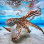 1-underwater-photographer-of-the-year-2017