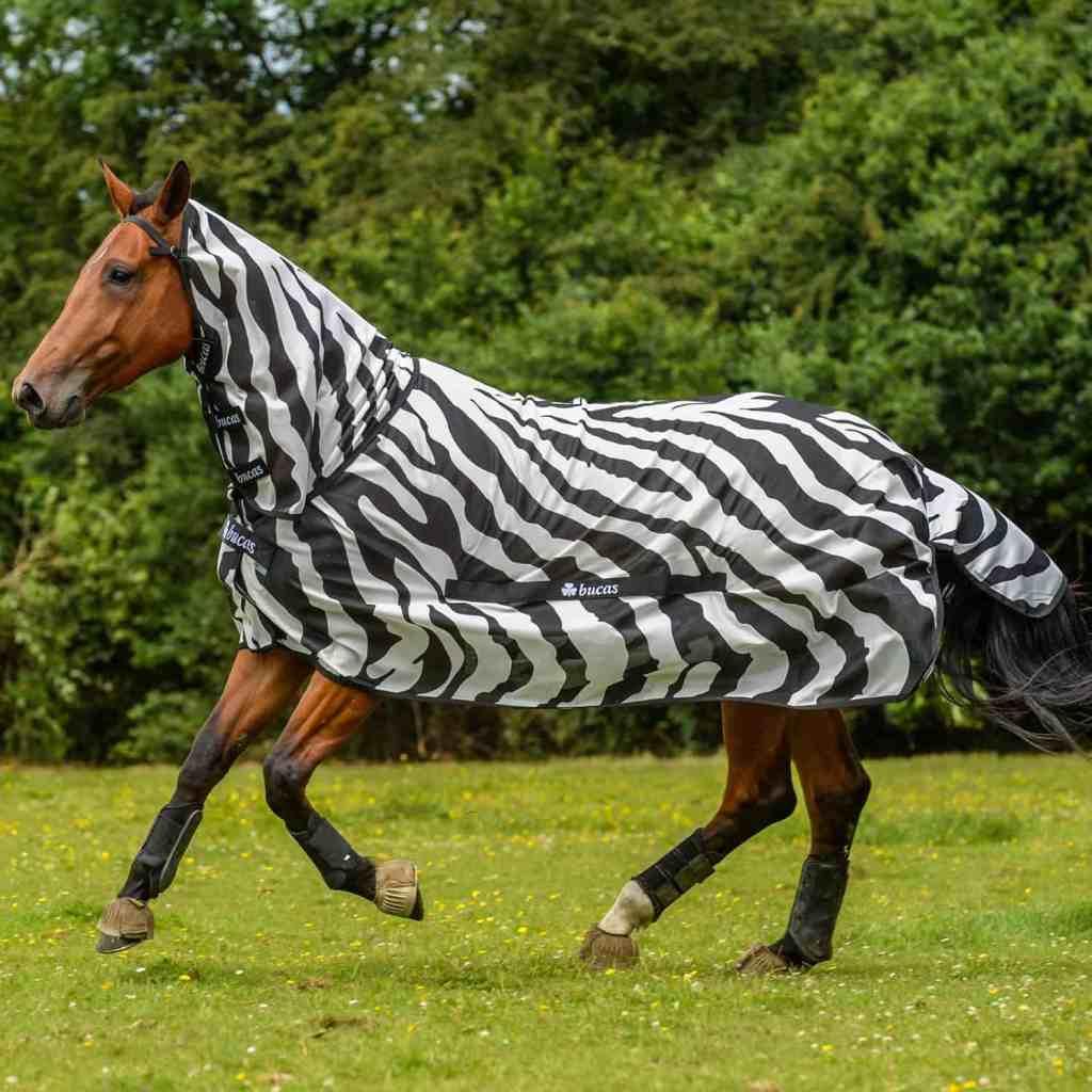 Horse dresses in buca's buzz flies suit
