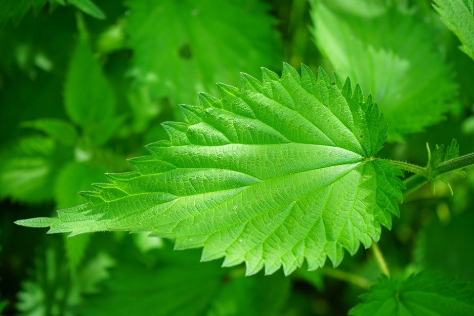 Poisonous Plants: 7 Deadly Poisonous Plants every plant Lover should know 8 - Daily Medicos