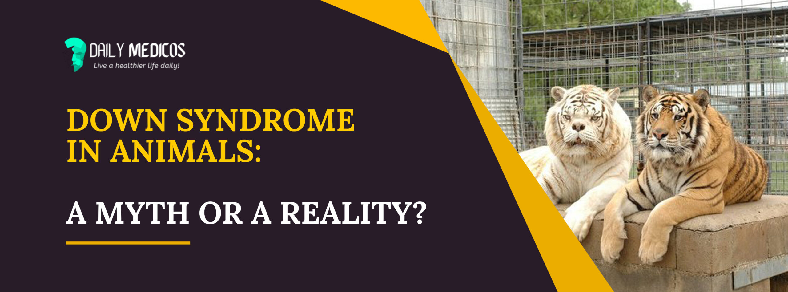 Down Syndrome In Animals: A Myth Or A Reality? 36 - Daily Medicos