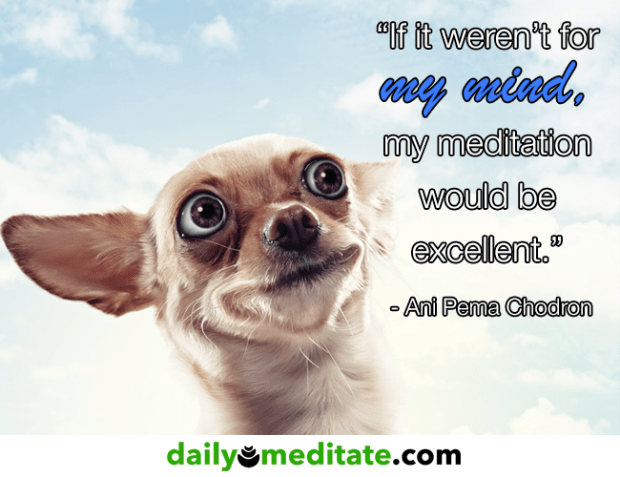 """""""Meditation trains the mind the way physical exercise strengthens the body."""" - Sharon Salzberg"""
