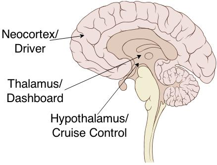 Half-Brain