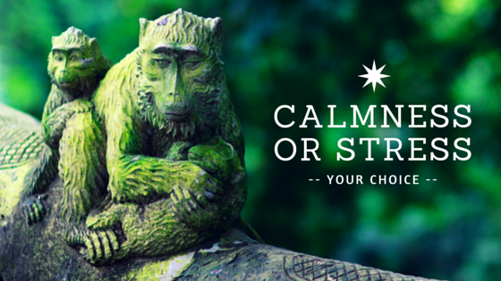 Calmness Or Stress = Your Choice