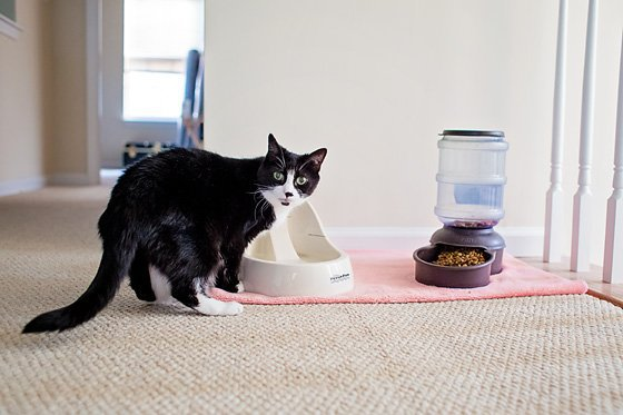 8 Ways To Keep A Clean House With A Cat Daily Mom