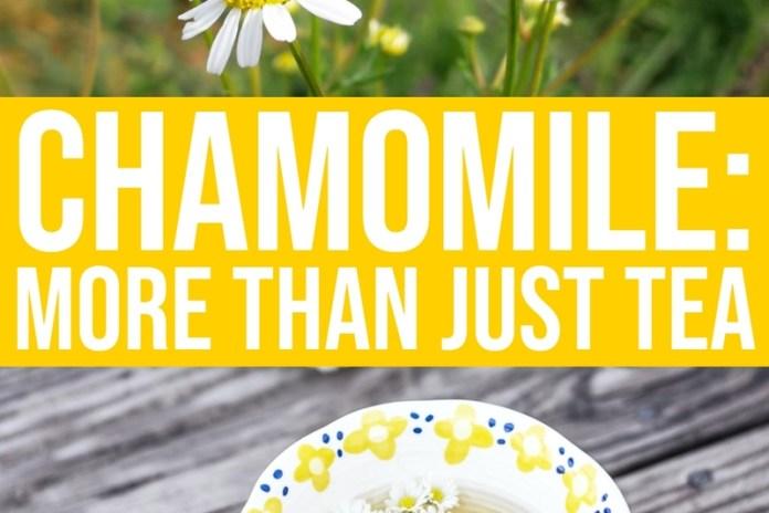 daily mom parent portal Chamomile Benefits