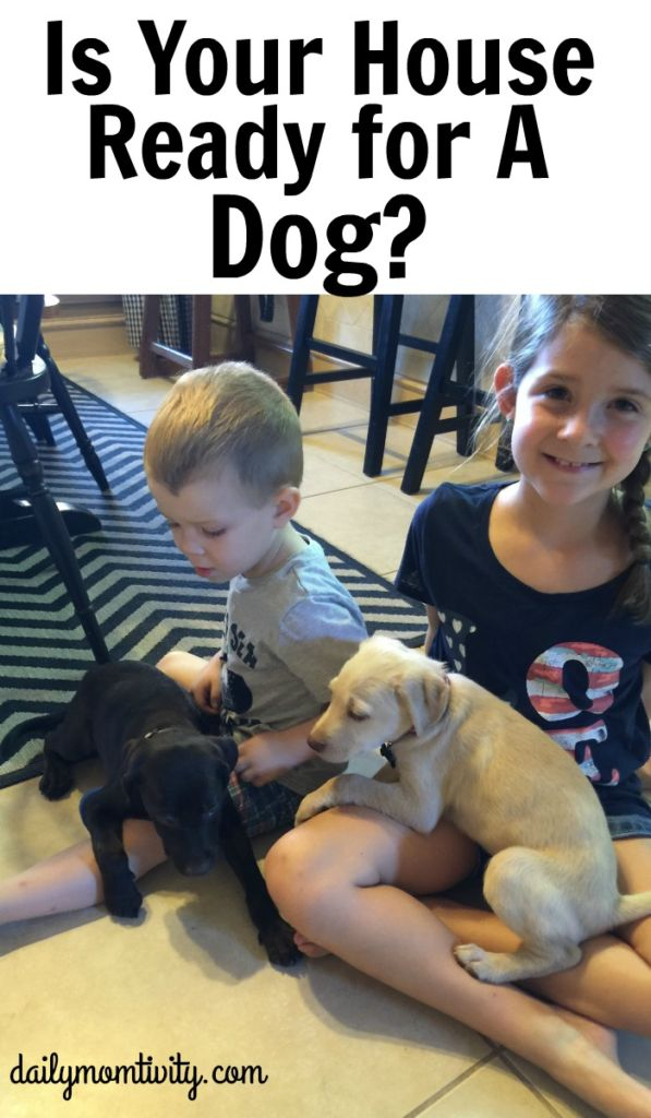 Kids wanting a dog? Make sure you are fully ready for a all the responsibility of a dog.
