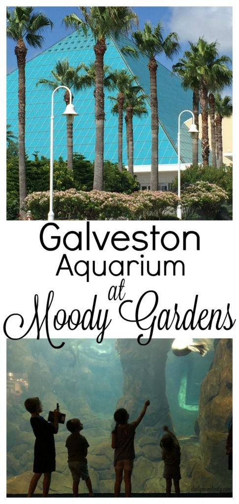 Daily MOMtivity Galveston Aquarium at Moody Gardens