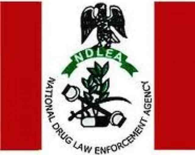 Our chairman not sacked by Buhari – NDLEA