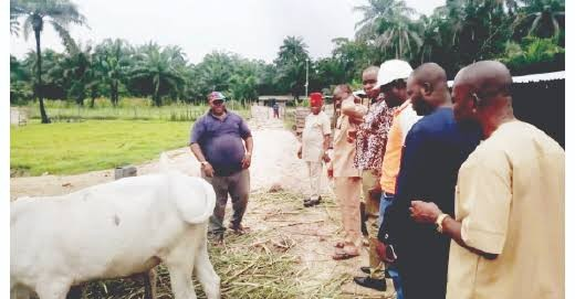 """""""Stop Attacking Cattle Trucks, Igbo Own Most of the Cows in Southeast"""" …Okafor, Igbo cattle dealer"""