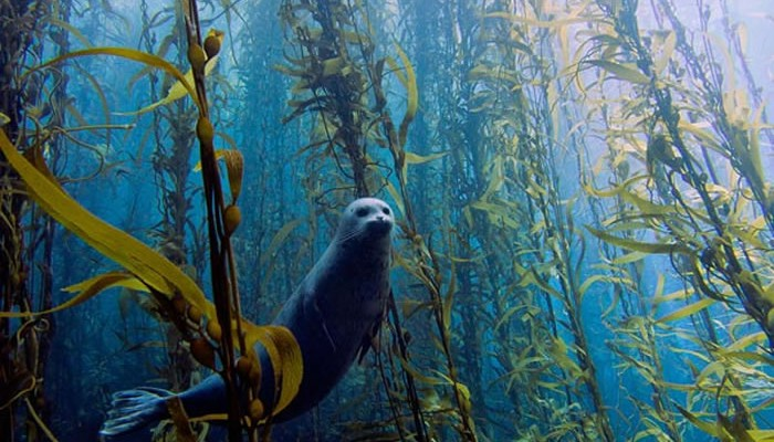 national geographic photo winners 2013 photography water seal