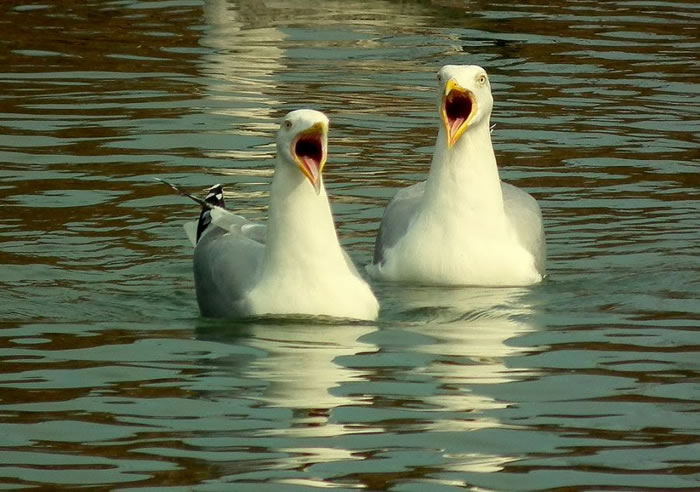 13. Two Gulls Shocked After Seeing Me Sun Bathing In My Y-Fronts
