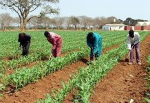 farm inputs