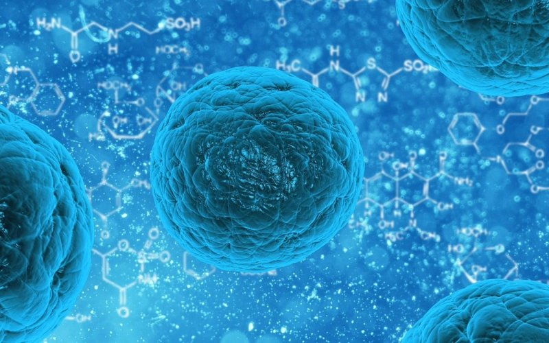 Research: Mitochondria Can Boost The Effectiveness Of Immunotherapy