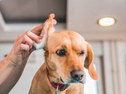 Lowering The Risk Of Medication Errors In Pets