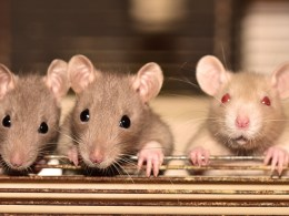 Confirmed Cases Of Hantavirus Infection Emerge In The USA