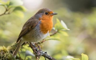 اس ایک پرندے میں وہ تمام خوبیاں ہیں جن کی خواتین دعا مانگتی ہیں کہ ان کے شوہروں میں موجود ہوں