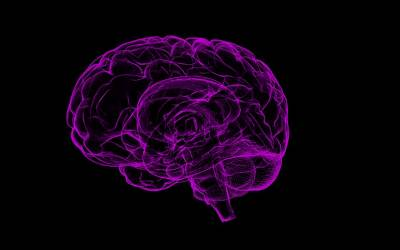 خواتین اور مردوں کے دماغوں میں ماں کے پیٹ سے ہی کیا فرق پیدا ہوجاتا ہے؟ سائنسدانوں نے بڑا انکشاف کردیا