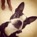 Instagram Dogster