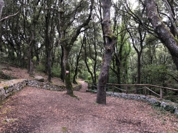 Trails and woods in Monte Ortobene