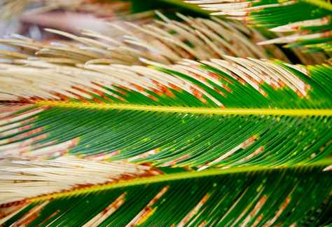 sago palm in close up photography
