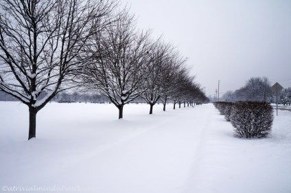 Winter, A Trivial Mind at Work