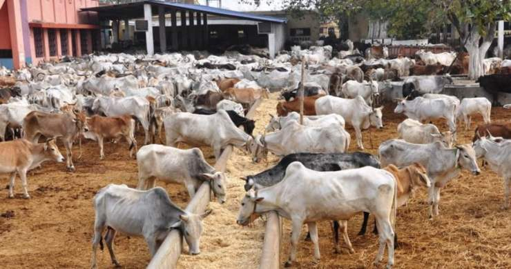 Image result for Cattle Nigeria  NIGERIANS REACT AS FG IS SET TO SPEND N100 BILLION ON NEW PLAN FOR COWS, OTHER ANIMALS cattle colony