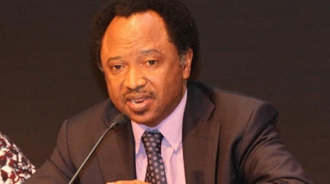 Image result for 2019 presidency: Shehu Sani reacts to US Institute's prediction