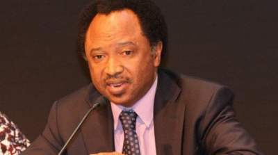 Image result for senator, Shehu Sani,