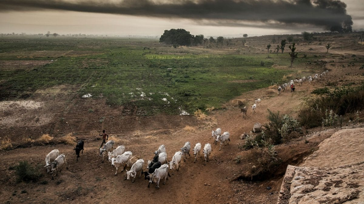 Fulani herdsmen - Miyetti Allah extends shutdown of markets to other South-East states