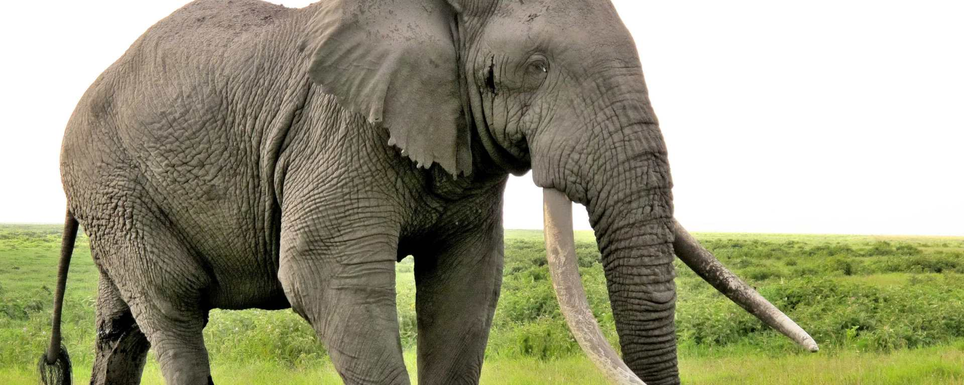 How to Scare off the Elephant