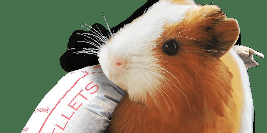 Daily Sack Hamster