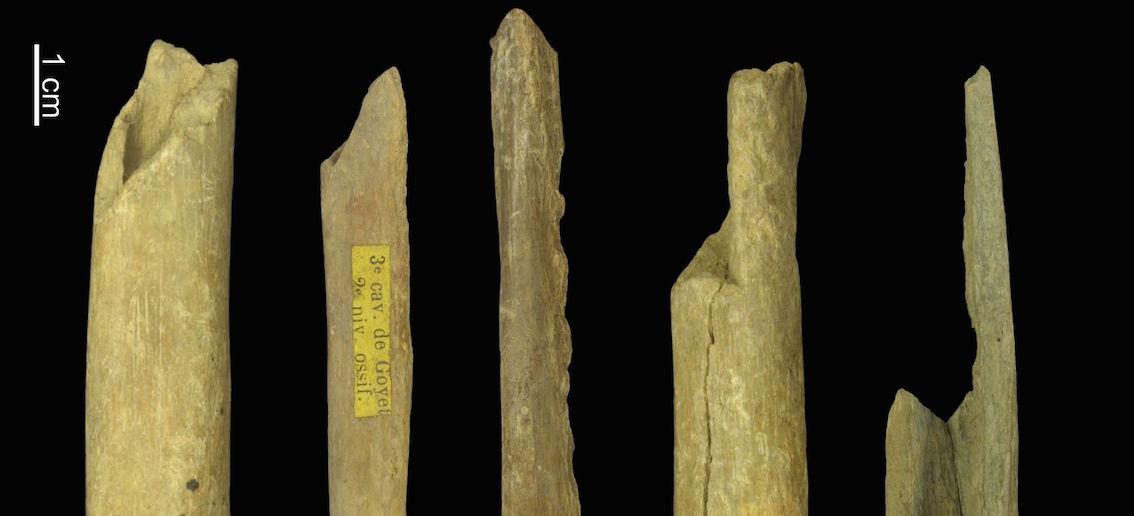 Os humains fragmentaires provenant des grottes de Goyet, datant entre 27 000 et 35 000 ans, et porteurs des haplogroupes M ou N. © Eric Dewamme / IRSNB