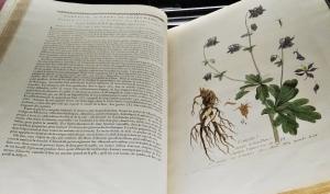 Illustration scientifique d'un pied d'ancolie issue de La botanique mise à portée de tous de Nicolas-François Regnault (18e siècle) © Céline Husson