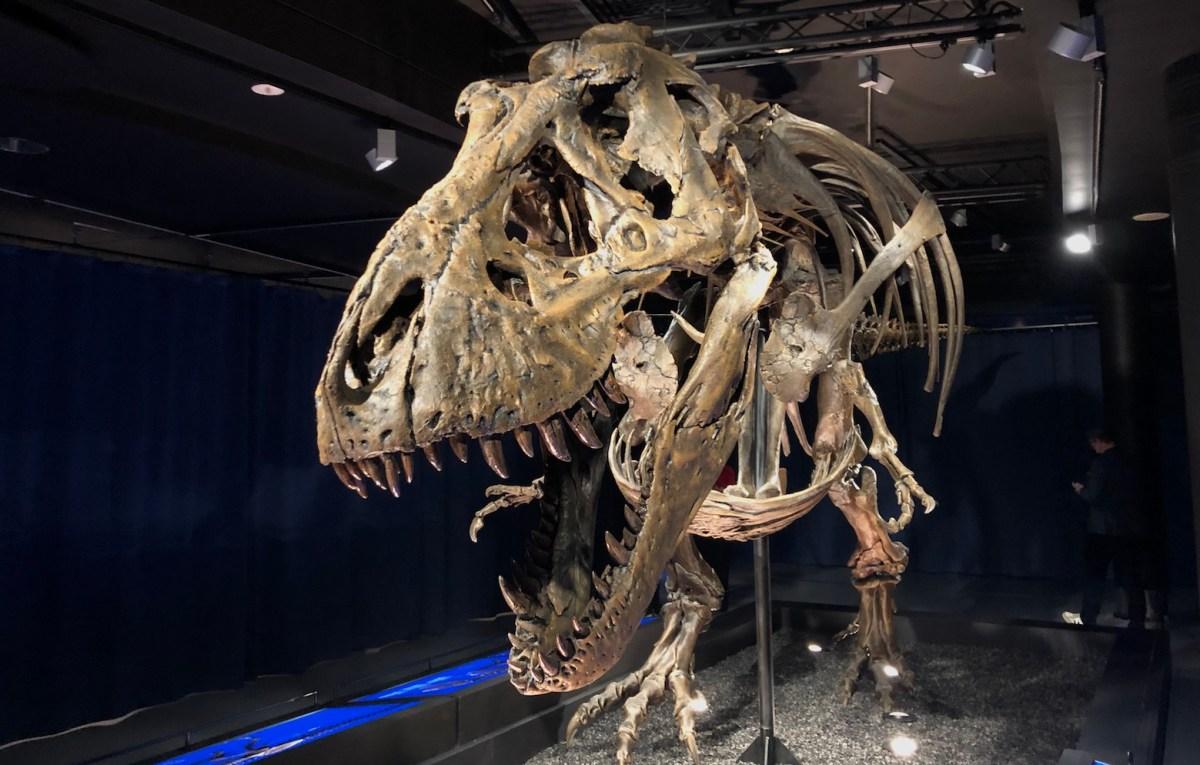 Trix, au Muséum des Sciences naturelles de Belgique. © Christian Du Brulle
