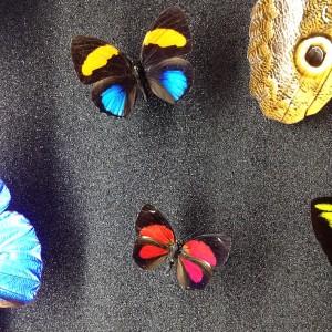 papillons science au palais