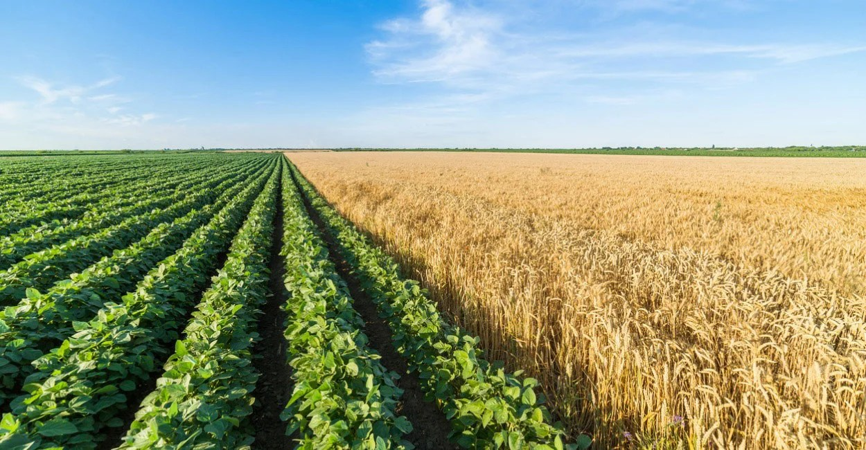 Farm Handouts Are Out Of Control Here Are 5 Reasons To