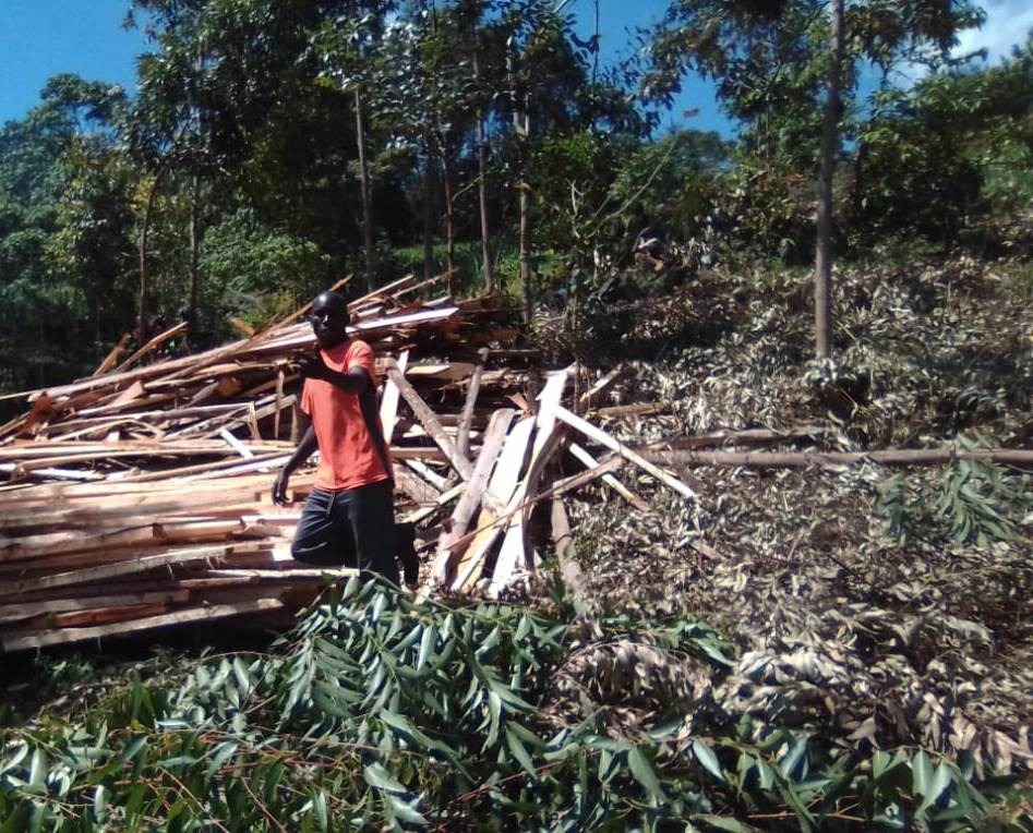 Photo of Henry Kirwa sell trees to feed his family