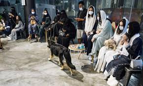 سعودی عرب میں پالتو کتوں کے لیے پہلا کیفے کھل گیا