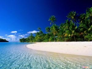web-tropical