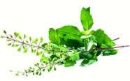 ingredient-tulsi-herb