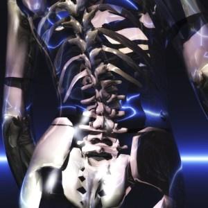 woman's pelvis, skeleton