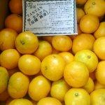 静岡・山田さんの低農薬みかん、明日入荷予定です。