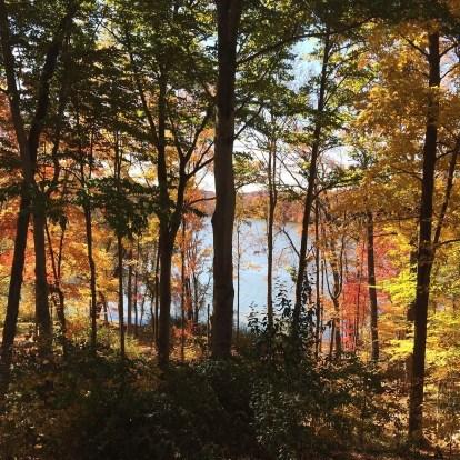 new england fall foliage pond