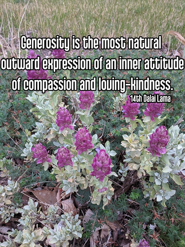 cool perspective purple flowers with green leaves in background - asteya non-stealing generosity Quote: Generosity is the most natural outward expression of an inner attitude of compassion and loving-kindness. - 14th Dalai Lama