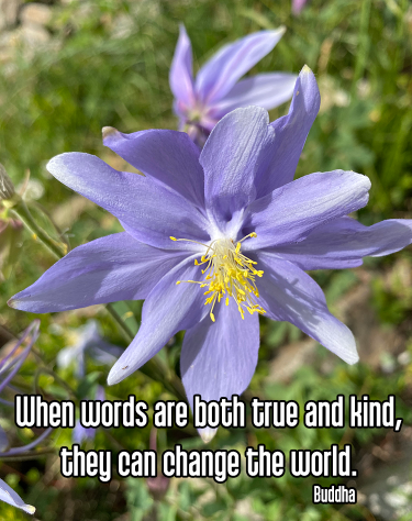 close-up purple blue and white columbine flower with fuzzy background of green grass and leaves and brown rocks - satya truth truthfulness honesty Quote - When words are both true and kind, they can change the world. - Buddha