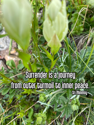 close-up white paintbrush mountain wildflower surrounded by bright green leaves - ishvara pranidhana acceptance surrender Quote: Surrender is a journey from outer turmoil to inner peace. - Sri Chinmoy