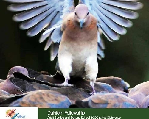 Infocus your community magazine – Dainfern Nature Association December 2015