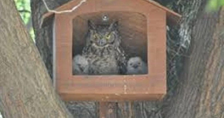 owl nesting boxes