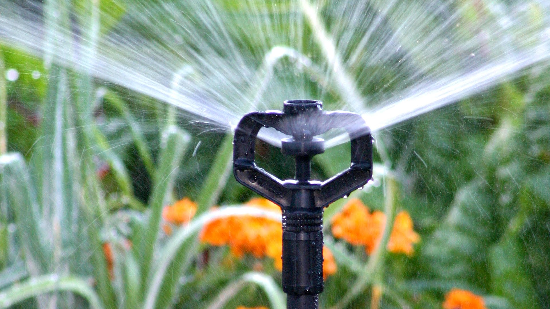 IRRIGATION ON COMMON AREAS