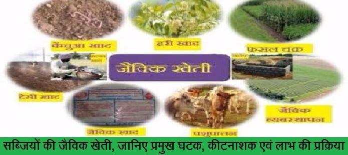 सब्जियों की जैविक खेती, जानिए प्रमुख घटक, कीटनाशक एवं लाभ की प्रक्रिया